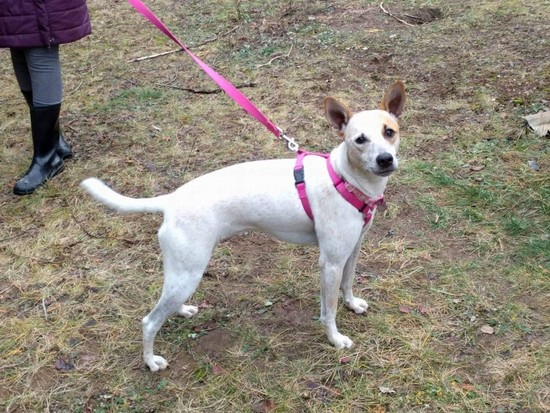OLM Pet of the Week- Meet Sita