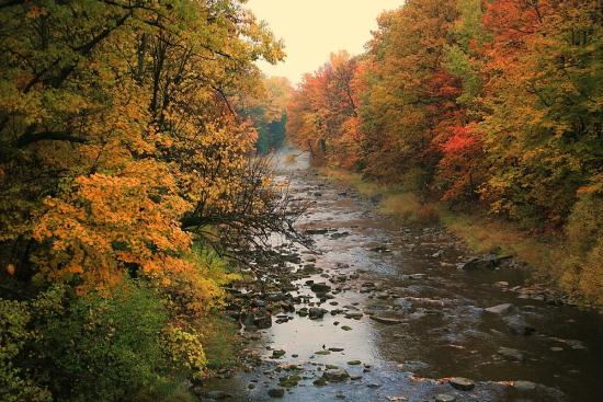 Help Protect Ottawa's Natural Spaces with Rideau Valley Conservation Foundation