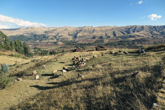 From Shepherding Sheep in Cuzco to Shepherding Souls in Canada