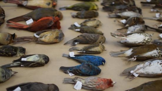 Safe Wings Ottawa Annual Display Raises Awareness for Bird Mortality in the City