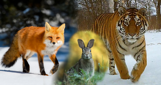 Tigers, rabbits, and foxes: the physiology of international tensions
