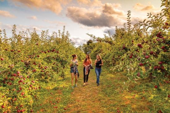 Fall for Nova Scotia's autumn magic