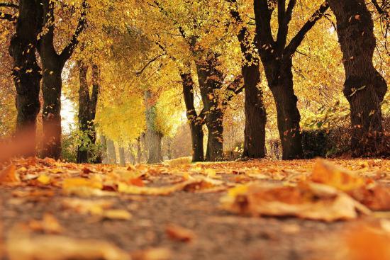 Celebrate the Fall Season in Ottawa