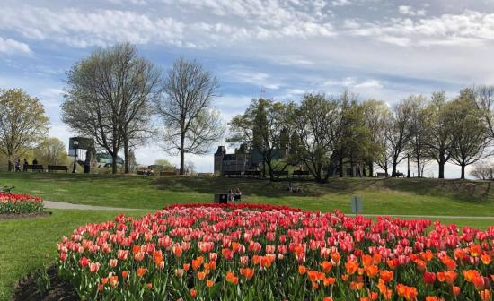 Head outside and visit Ottawa's great gardens