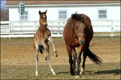 mare-and-foal_0