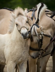 Ottawa Horse Day A Big Hit With Families
