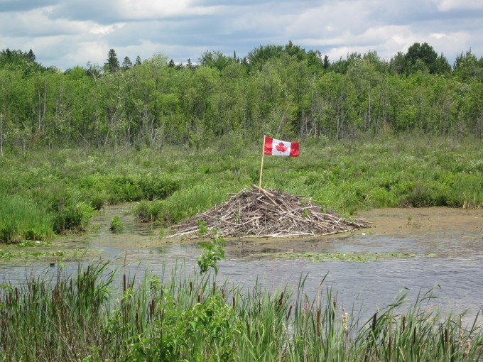 Beaver lodge Canada Day