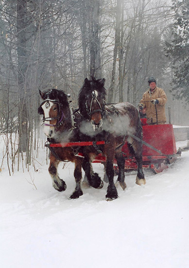Maple_Fultons horse sleighride_verbal permissions_fall