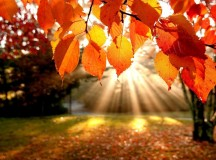 trees-autumn-leaves-fall-sunlight-landscapes-nature-1920x2560