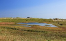 Sable Island: A Dream Come True