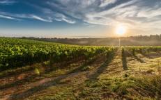 Clink & Drink Pink with Rosé wines from Vieni, Vineland & Greenlane